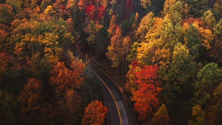 1920x1080 aerial photo of fall leaves and a road going into the woods